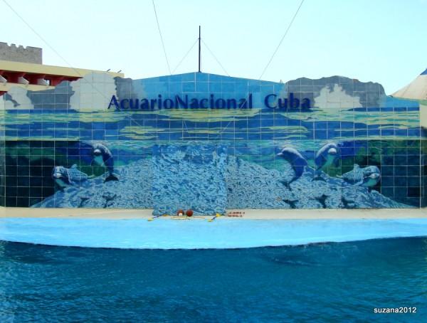 HavanaAquariumMiramar7